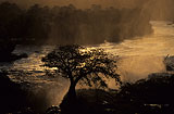 Kunene River/Epupa-Falls mit Baobab, Adansonia digitata bei Sonnenaufgang, Kaokoveld, Namibia