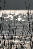 Reflektierendes Wasser und Schilf, Lago di Piano, Lombardei, Nord-Italien
