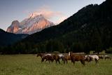 Weidende Pferde vor dem Marmolata-Massiv mit dem Gran Vernel bei Sonnenuntergang, Fassa-Tal, Dolomiten, Italien